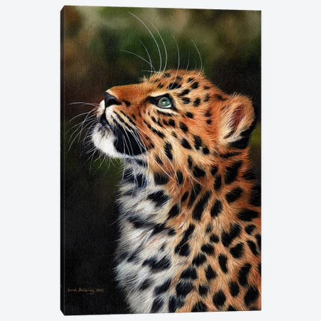 Leopard Cub Canvas Print #SAS62} by Sarah Stribbling Canvas Print