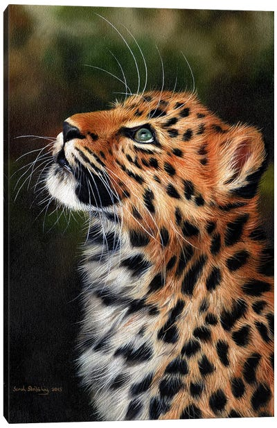 Leopard Cub Canvas Art Print