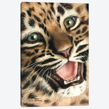 Leopard Cub I 3-Piece Canvas #SAS63} by Sarah Stribbling Canvas Print
