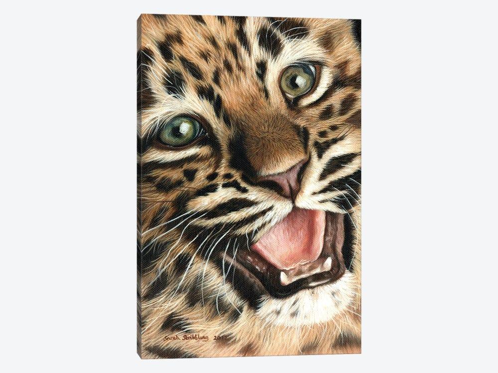 Leopard Cub I by Sarah Stribbling 1-piece Canvas Artwork