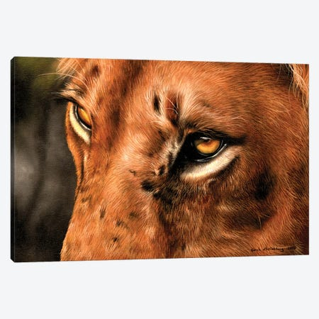 Lion Close-Up Canvas Print #SAS65} by Sarah Stribbling Canvas Art