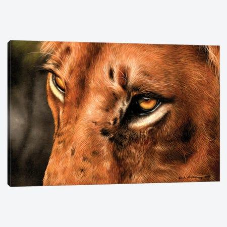 Lion Close-Up Canvas Print #SAS65} by Sarah Stribbling Canvas Art