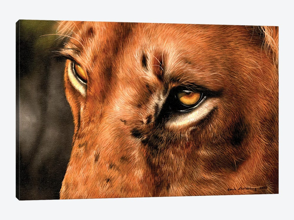 Lion Close-Up by Sarah Stribbling 1-piece Canvas Artwork