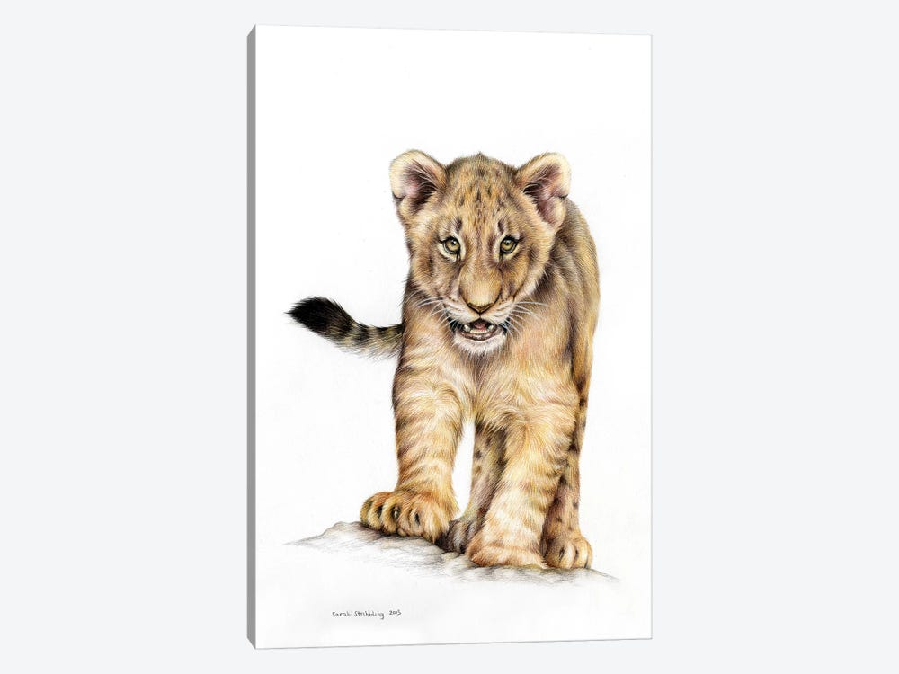 Lion Cub by Sarah Stribbling 1-piece Canvas Print