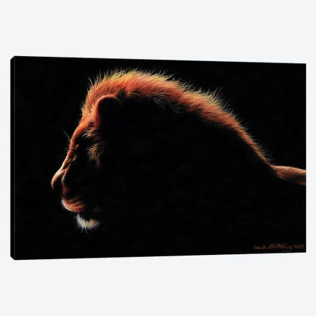 Lion Twilight I Canvas Print #SAS67} by Sarah Stribbling Canvas Wall Art