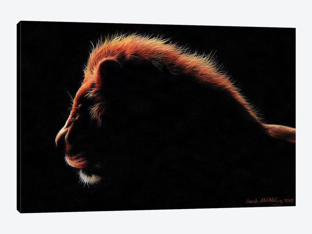 Lion Twilight I by Sarah Stribbling 1-piece Canvas Wall Art