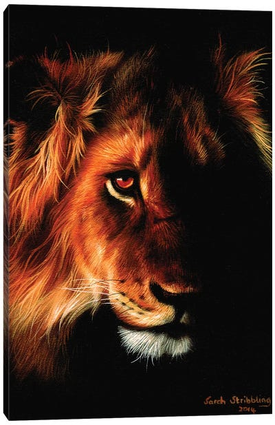 Lion Twilight II Canvas Art Print