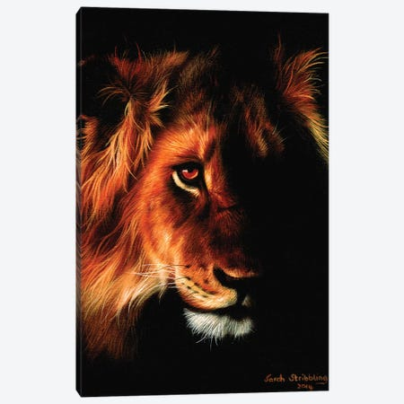 Lion Twilight II 3-Piece Canvas #SAS68} by Sarah Stribbling Canvas Print