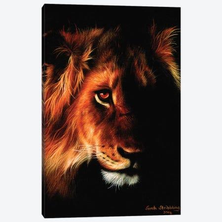 Lion Twilight II Canvas Print #SAS68} by Sarah Stribbling Canvas Print