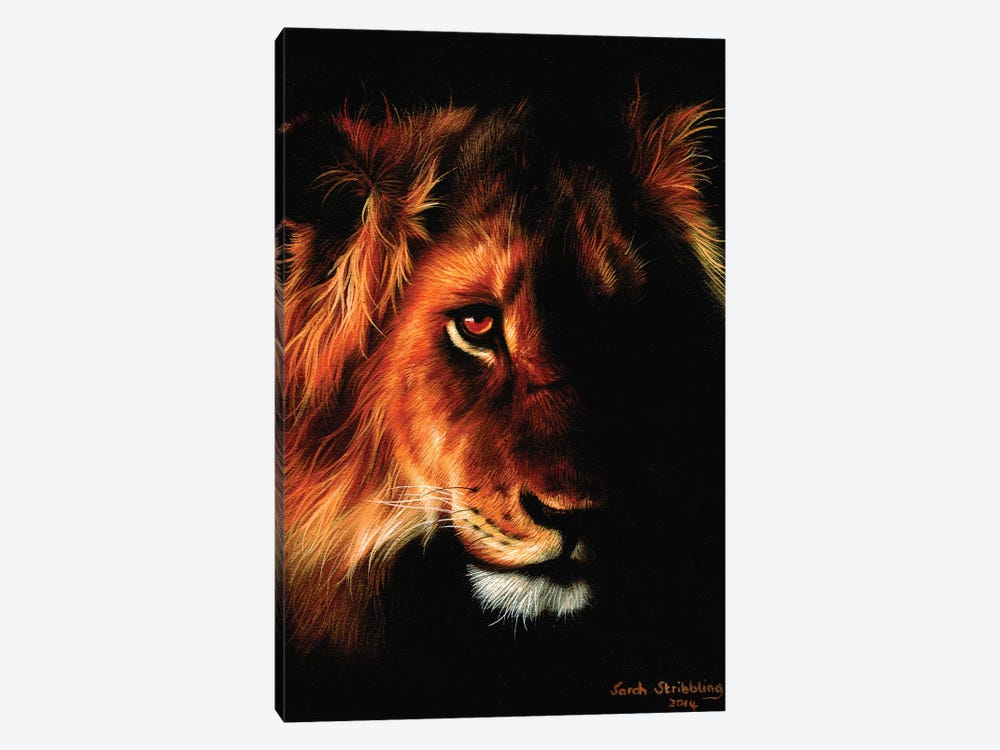 Lion Twilight II by Sarah Stribbling 1-piece Canvas Print