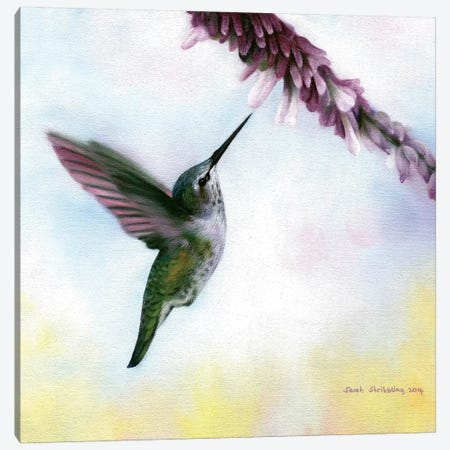 Anna's Hummingbird Canvas Print #SAS6} by Sarah Stribbling Canvas Artwork