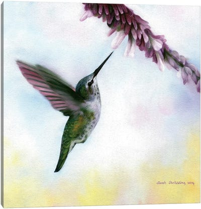 Anna's Hummingbird Canvas Art Print