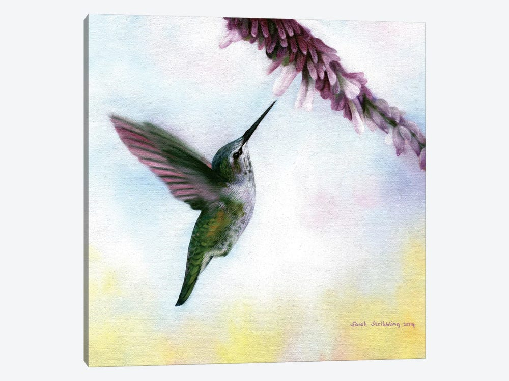 Anna's Hummingbird by Sarah Stribbling 1-piece Canvas Print