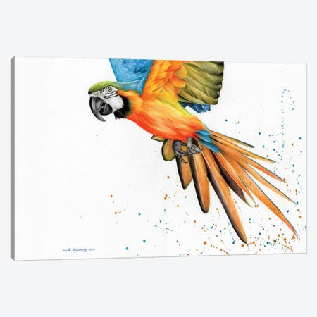 Macaw  Canvas Print #SAS70} by Sarah Stribbling Canvas Wall Art