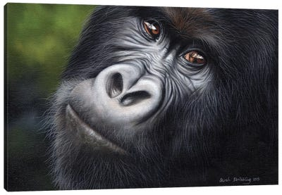 Mountain Gorilla Canvas Art Print