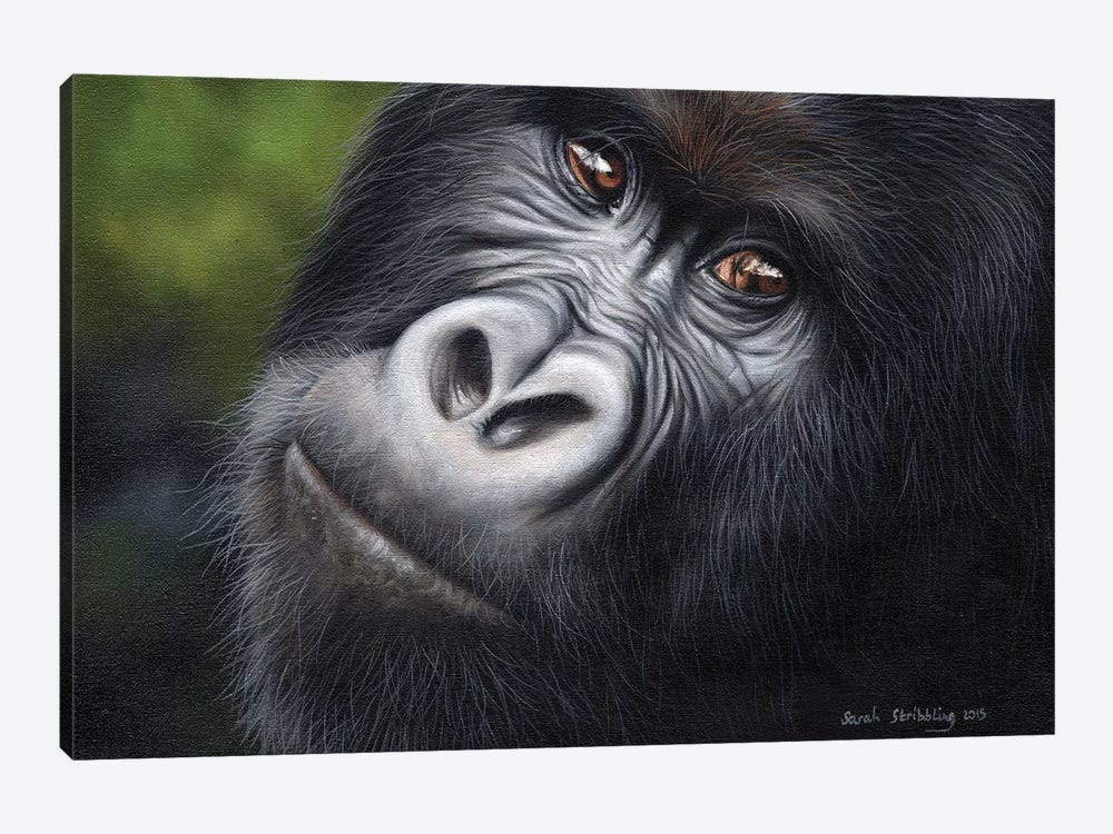 Mountain Gorilla by Sarah Stribbling 1-piece Canvas Artwork