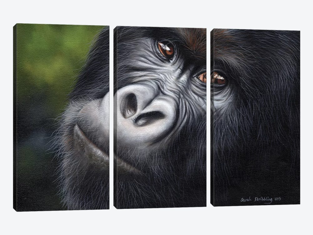 Mountain Gorilla by Sarah Stribbling 3-piece Canvas Artwork