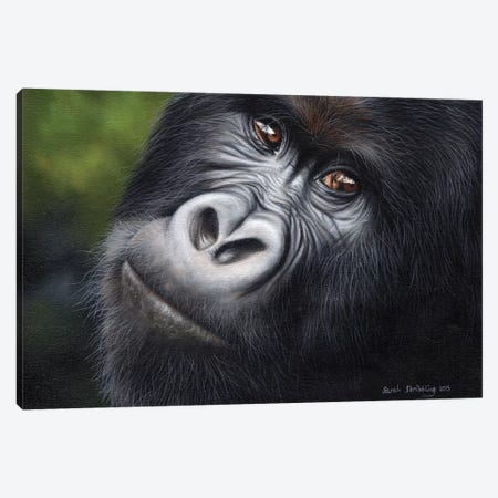 Mountain Gorilla Canvas Print #SAS72} by Sarah Stribbling Canvas Wall Art