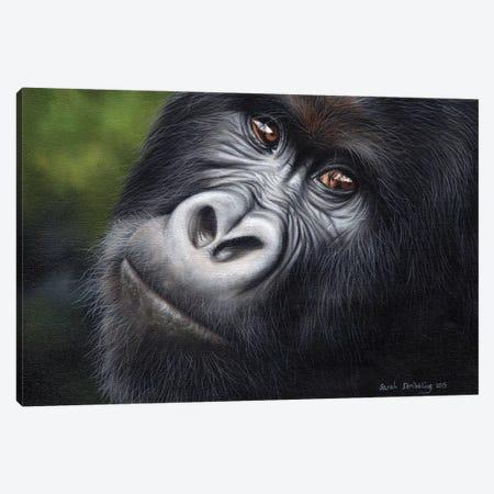 Mountain Gorilla Canvas Print #SAS72} by Sarah Stribbling Canvas Wall Art