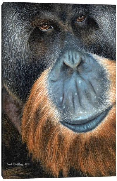 Orangutan Canvas Art Print