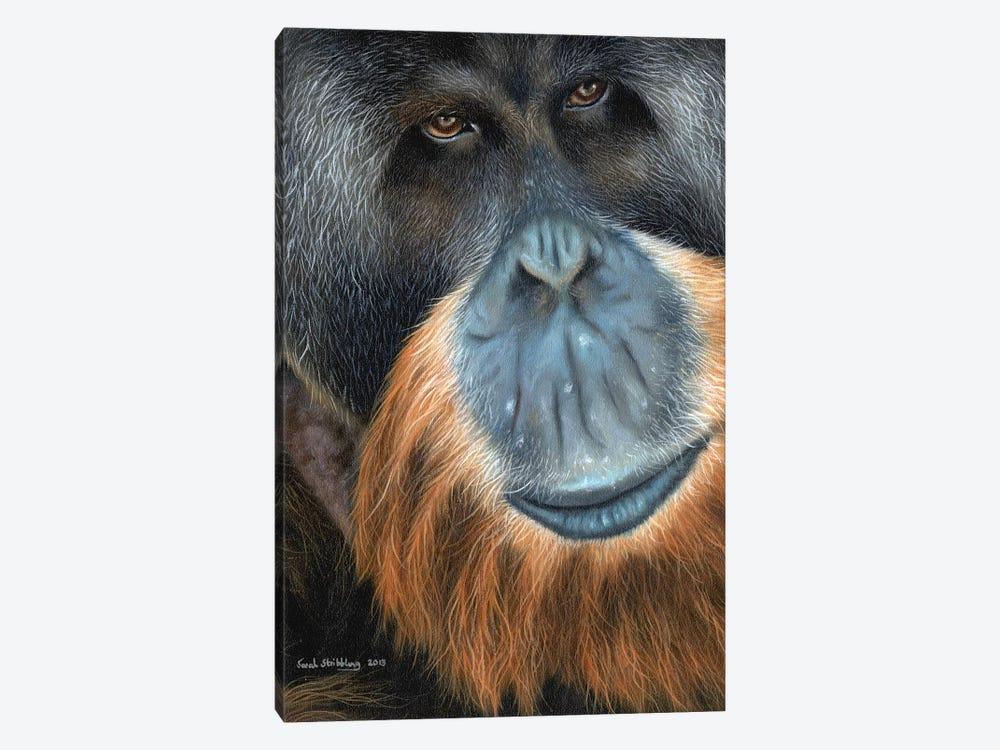Orangutan by Sarah Stribbling 1-piece Canvas Print