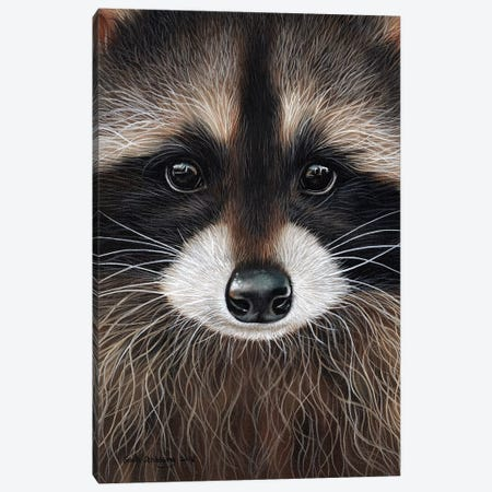 Raccoon I Canvas Print #SAS76} by Sarah Stribbling Canvas Art Print
