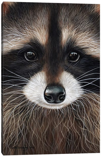 Raccoon I Canvas Art Print