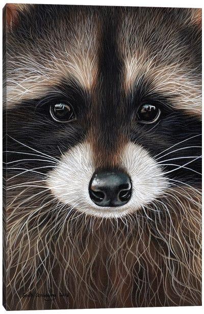 Raccoon I Canvas Art Print