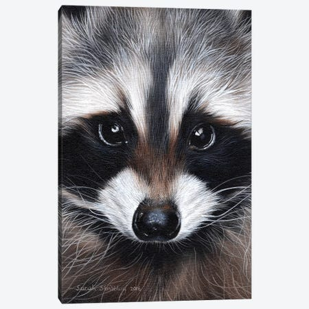 Raccoon IV Canvas Print #SAS79} by Sarah Stribbling Canvas Wall Art