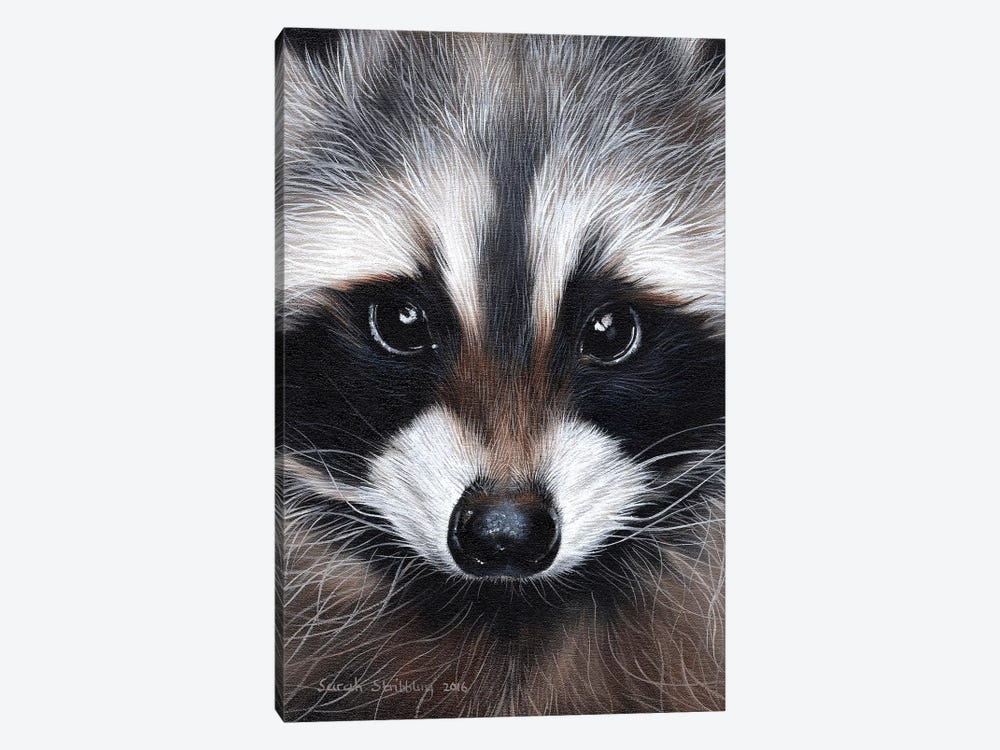 Raccoon IV by Sarah Stribbling 1-piece Art Print