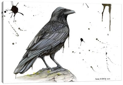 Raven On A Branch by Sarah Stribbling Canvas Art Print