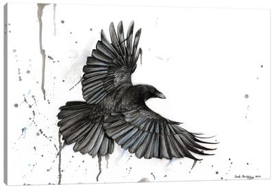 Raven Fly Canvas Art Print