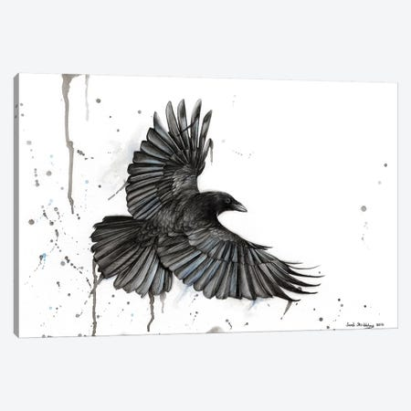 Raven Fly Canvas Print #SAS81} by Sarah Stribbling Canvas Print