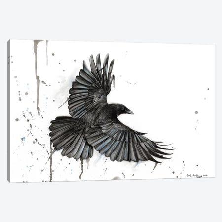 Raven Fly Canvas Print #SAS81} by Sarah Stribbling Canvas Print
