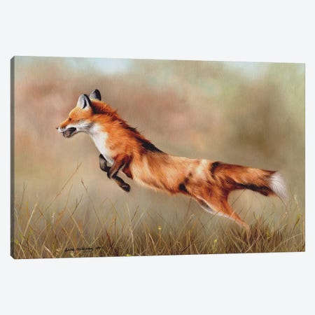 Red Fox Canvas Print #SAS82} by Sarah Stribbling Canvas Art Print