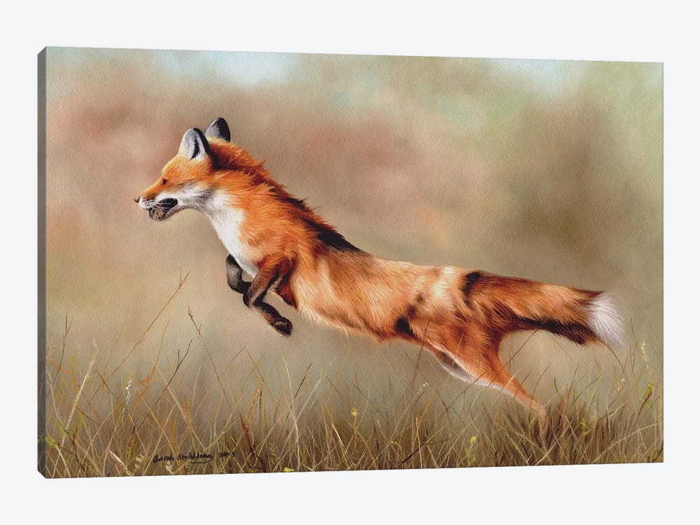 Red Fox by Sarah Stribbling 1-piece Canvas Art Print