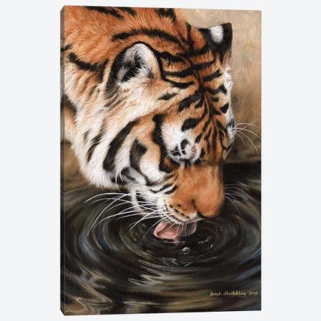 Siberian Tiger II Canvas Print #SAS86} by Sarah Stribbling Canvas Art