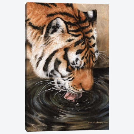 Siberian Tiger II 3-Piece Canvas #SAS86} by Sarah Stribbling Canvas Art
