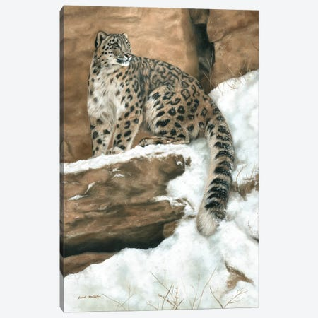 Snow Leopard I Canvas Print #SAS87} by Sarah Stribbling Canvas Wall Art
