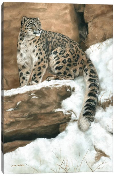 Snow Leopard I Canvas Art Print