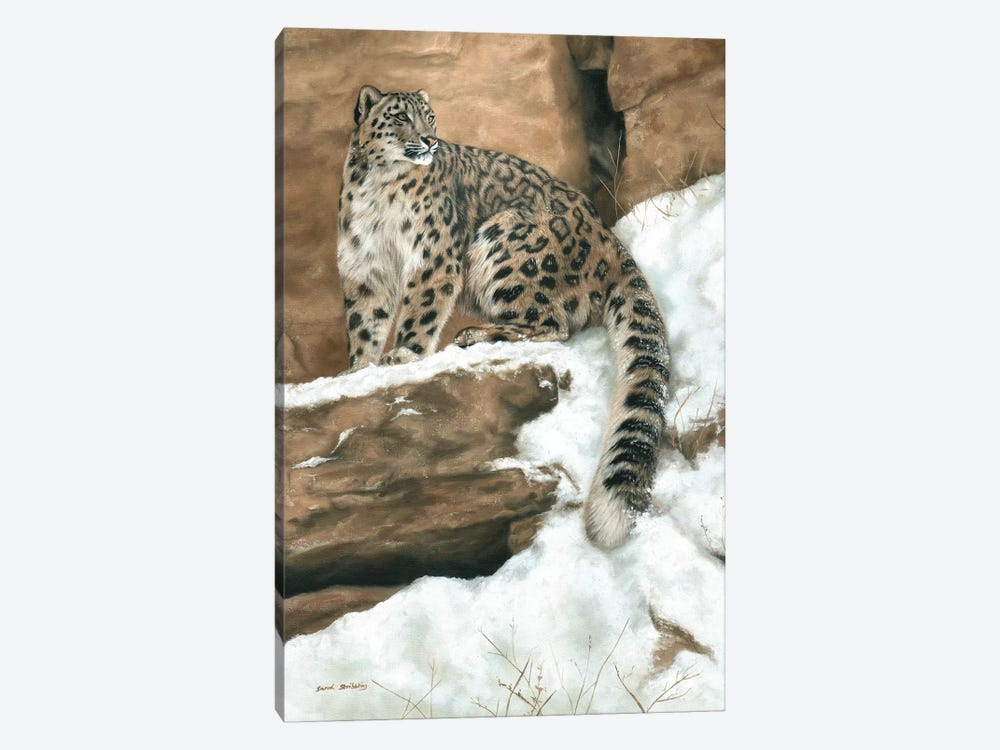 Snow Leopard I by Sarah Stribbling 1-piece Canvas Artwork
