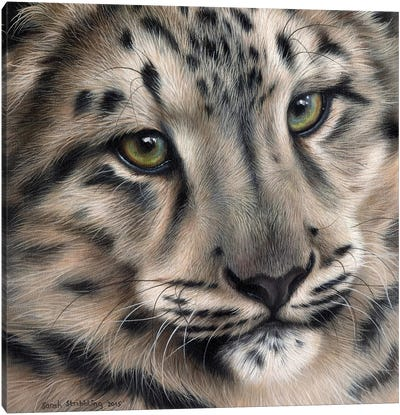 Snow Leopard II by Sarah Stribbling Canvas Art Print