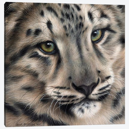 Snow Leopard II 3-Piece Canvas #SAS88} by Sarah Stribbling Canvas Art Print
