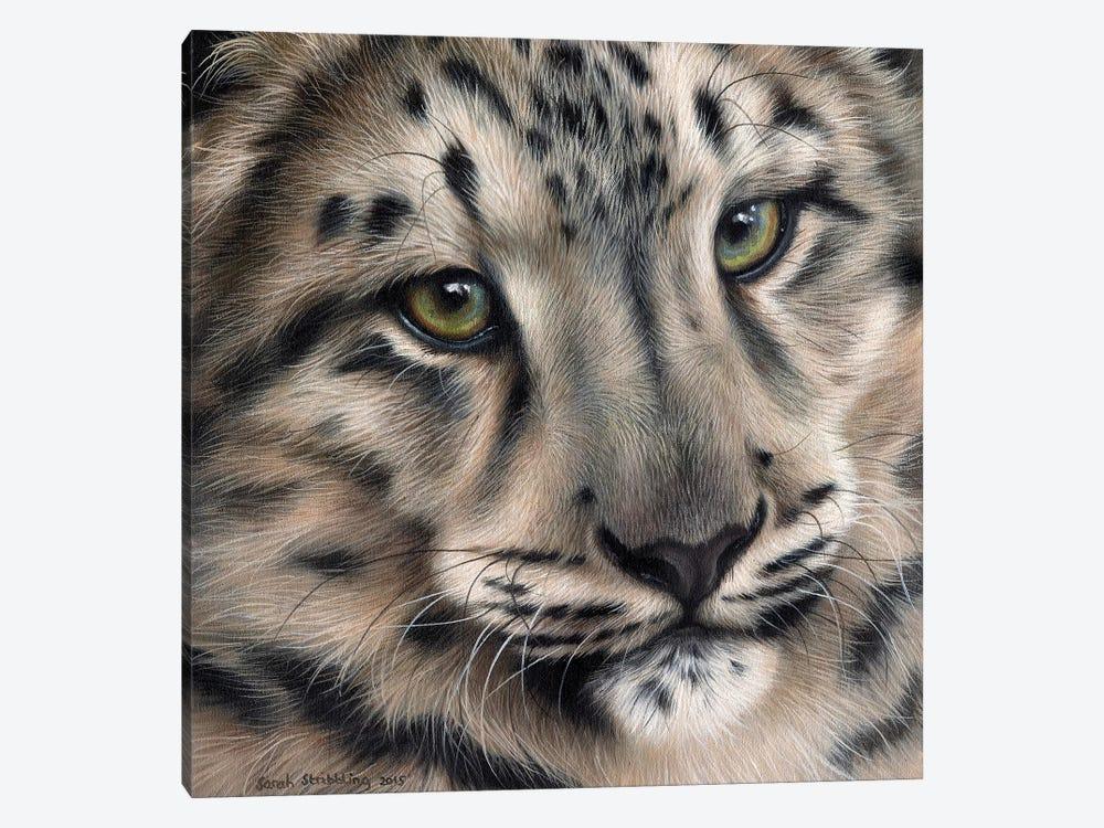 Snow Leopard II by Sarah Stribbling 1-piece Canvas Art Print