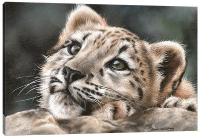 Snow Leopard Cub by Sarah Stribbling Canvas Art Print