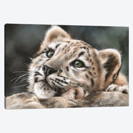 Snow Leopard Cub Canvas Print #SAS89} by Sarah Stribbling Art Print