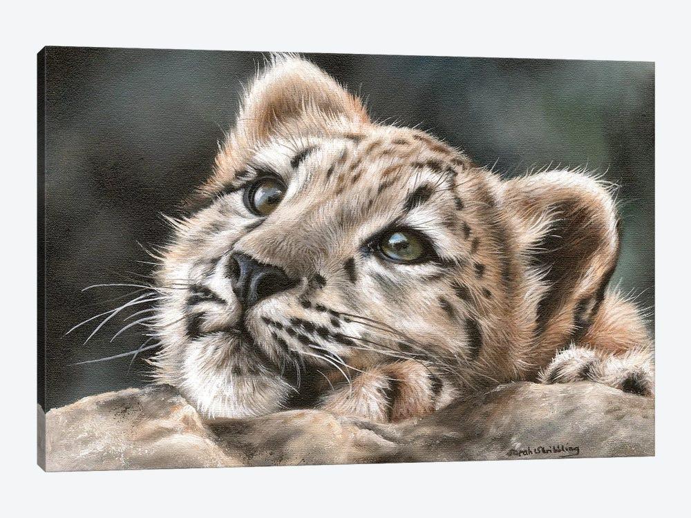 Snow Leopard Cub by Sarah Stribbling 1-piece Canvas Artwork