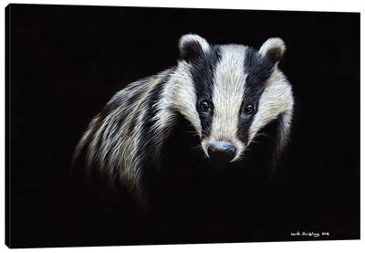Badger Canvas Art Print