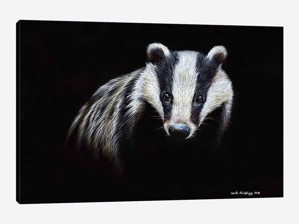 Badger by Sarah Stribbling 1-piece Canvas Print