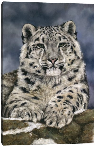 Snow Leopard III Canvas Art Print